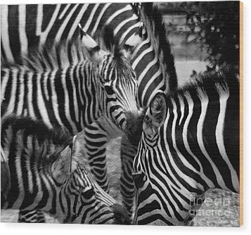 Wood Print featuring the photograph Zebra In A Crowd by Tom Brickhouse