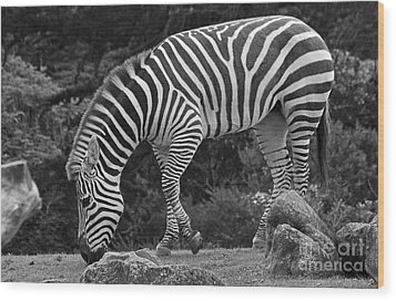 Wood Print featuring the photograph Zebra In Black And White by Kate Brown