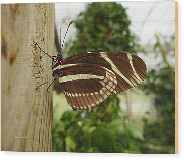 Zebra Longtail Wood Print