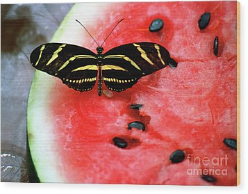 Zebra Longwing Butterfly On Watermelon Slice Wood Print
