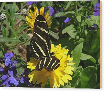 Zebra Longwing On Yellow With Purple Flowers - 103 Wood Print