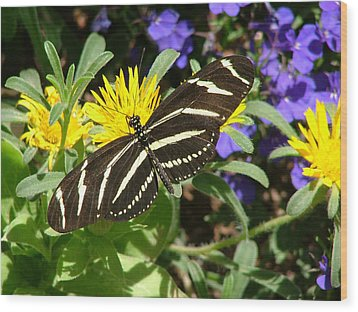 Zebra Longwing On Yellow With Purple Flowers - 104 Wood Print