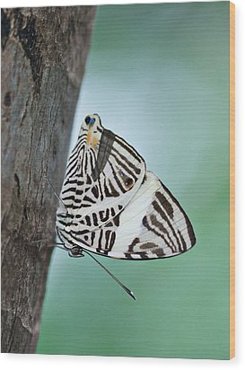 Wood Print featuring the photograph Zebra Mosiac Butterfly by Zoe Ferrie