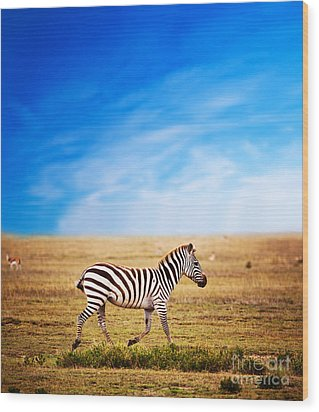 Zebra On African Savanna. Wood Print by Michal Bednarek
