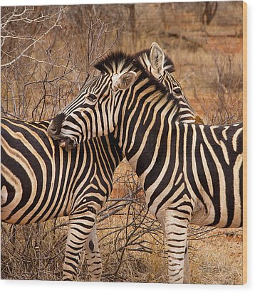 Wood Print featuring the photograph Zebra Pair by Phil Stone