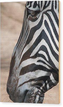 Zebra Profile Wood Print by Dan Holm