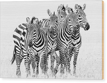 Zebra Quintet Wood Print