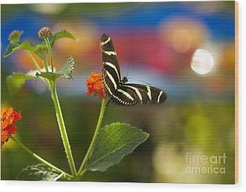 Zebra Striped Butterflies Wood Print by Cari Gesch