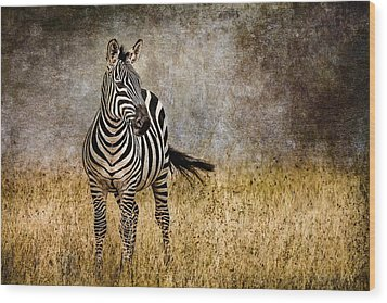 Zebra Tail Flick Wood Print