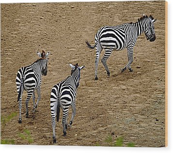 Wood Print featuring the photograph Zebra Tails by AJ  Schibig