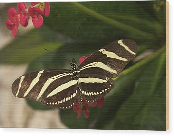Wood Print featuring the photograph Zebras Can Fly by Sandy Molinaro