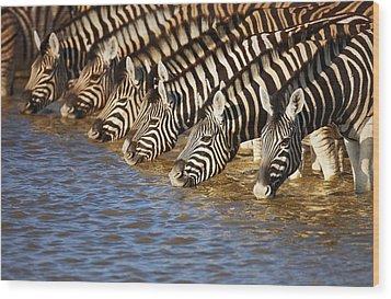 Zebras Drinking Wood Print by Johan Swanepoel
