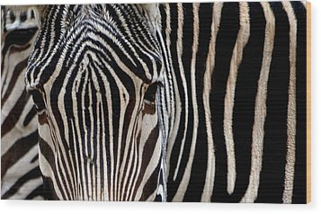 Wood Print featuring the photograph Zebras Face To Face by Nadalyn Larsen