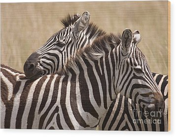 Wood Print featuring the photograph Zebras Friendship by Chris Scroggins