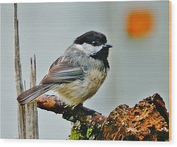 Wood Print featuring the photograph Zen Chickadee by VLee Watson