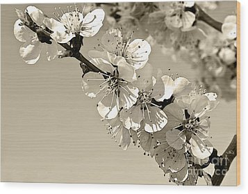 Wood Print featuring the photograph Zen by Sandi Mikuse