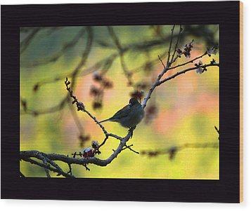 Zen Spring Wood Print by Susanne Still