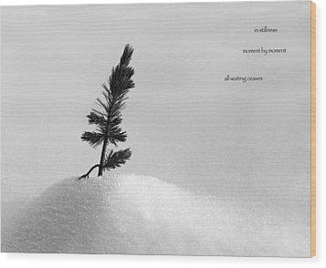 Wood Print featuring the photograph Zen Wisdom Stillness by Peter v Quenter
