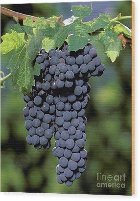 Zinfandel Wine Grapes Wood Print by Craig Lovell