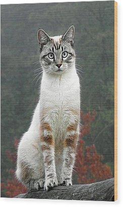 Zing The Cat Wood Print