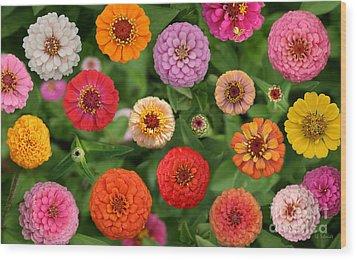 Zinnia Garden Wood Print