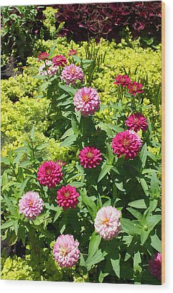 Wood Print featuring the photograph Zinnia Garden by Ellen Tully
