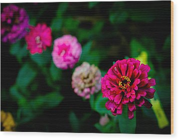 Zinnia Singapore Flower Wood Print by Donald Chen