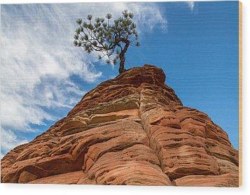 Zion Cypress Wood Print by John Daly