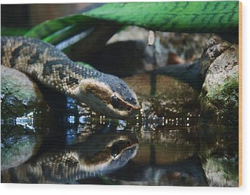 Wood Print featuring the photograph Zoo 039 by Andy Lawless