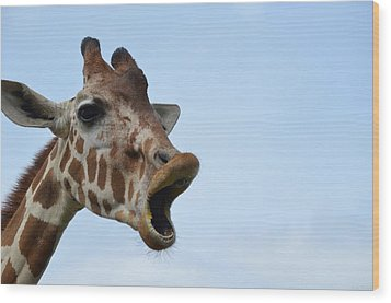 Zootography Giraffe Honking Wood Print by Jeff at JSJ Photography