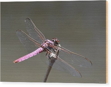 Zootography2 Pink Dragonfly Wood Print by Jeff at JSJ Photography