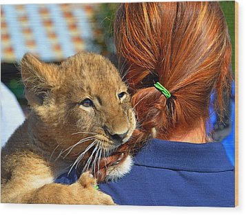Zootography3 Zion The Lion Cub Likes Redheads Wood Print by Jeff at JSJ Photography