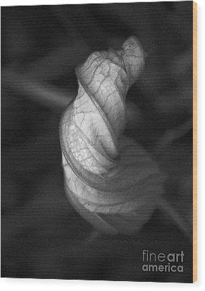Zucchini Wood Print