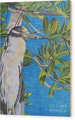 Yellow Crested Night Heron Painting Wood Print by Judy Via-Wolff