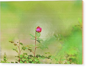 A Rose  Wood Print by Gib LaStrapes