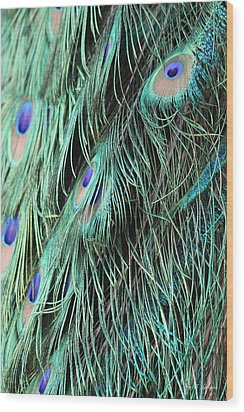 Wood Print featuring the photograph  A Waterfall Of Feathers  by Amy Gallagher