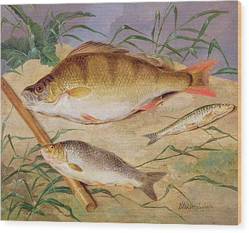 An Angler's Catch Of Coarse Fish Wood Print by D Wolstenholme