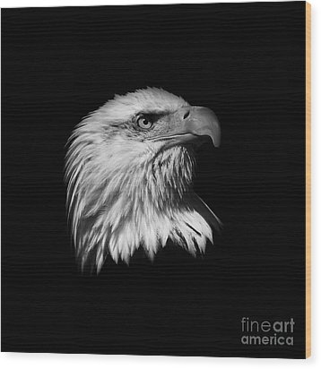 Black And White American Eagle Wood Print by Steve McKinzie