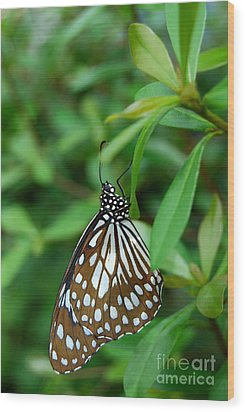 Wood Print featuring the photograph  Blue Tiger Butterfly by Eva Kaufman