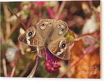 Wood Print featuring the photograph  Buckeye Butterfly  by Eva Kaufman