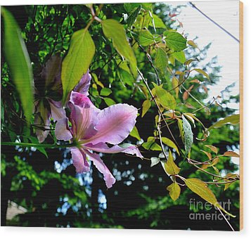 Wood Print featuring the photograph  Clematis Flower by Tanya  Searcy