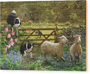 Collecting The Strays Wood Print by Trudi Simmonds