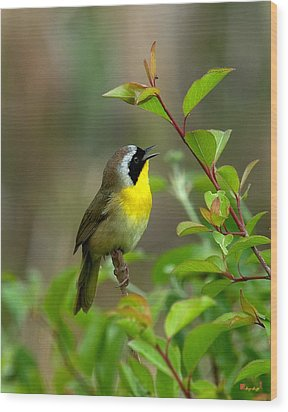 Wood Print featuring the photograph  Common Yellowthroat Warbler Warbling Dsb006 by Gerry Gantt