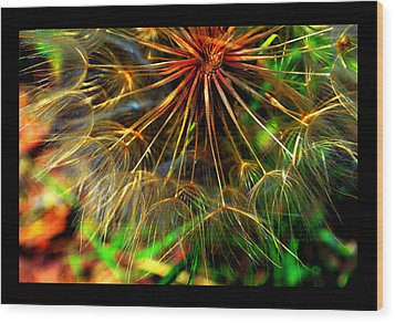 Wood Print featuring the photograph  Dandelion Dreamtime by Susanne Still