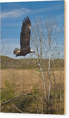 Wood Print featuring the photograph  Eagle Circleing Her Nest by Randall Branham