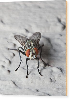 Fly On The Wall Wood Print by Nick  Shirghio
