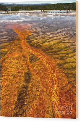 Grand Prismatic Spring In Yellowstone National Park - 02 Wood Print by Gregory Dyer