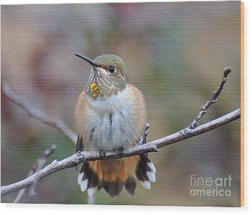 Hummingbird Stretch Six Wood Print