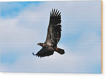 Wood Print featuring the photograph  Juvenile Bald Eagle by Peggy Franz