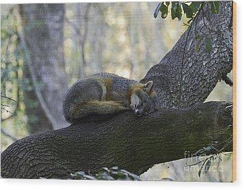 Midday Nap Wood Print